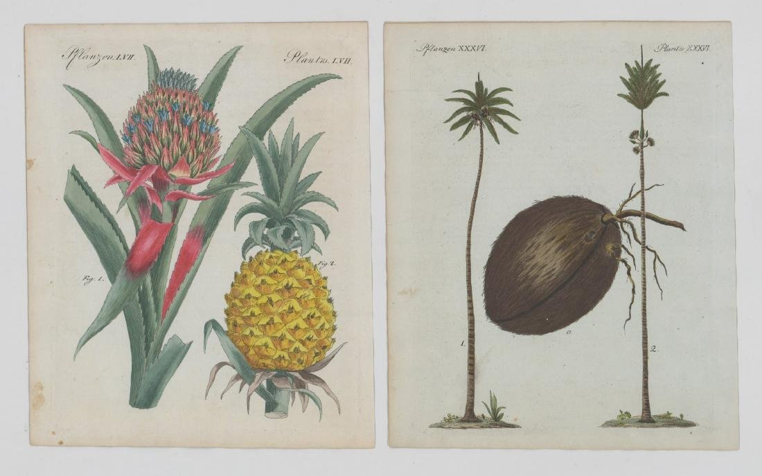 Pair of Antique Colored Botanical Etchings