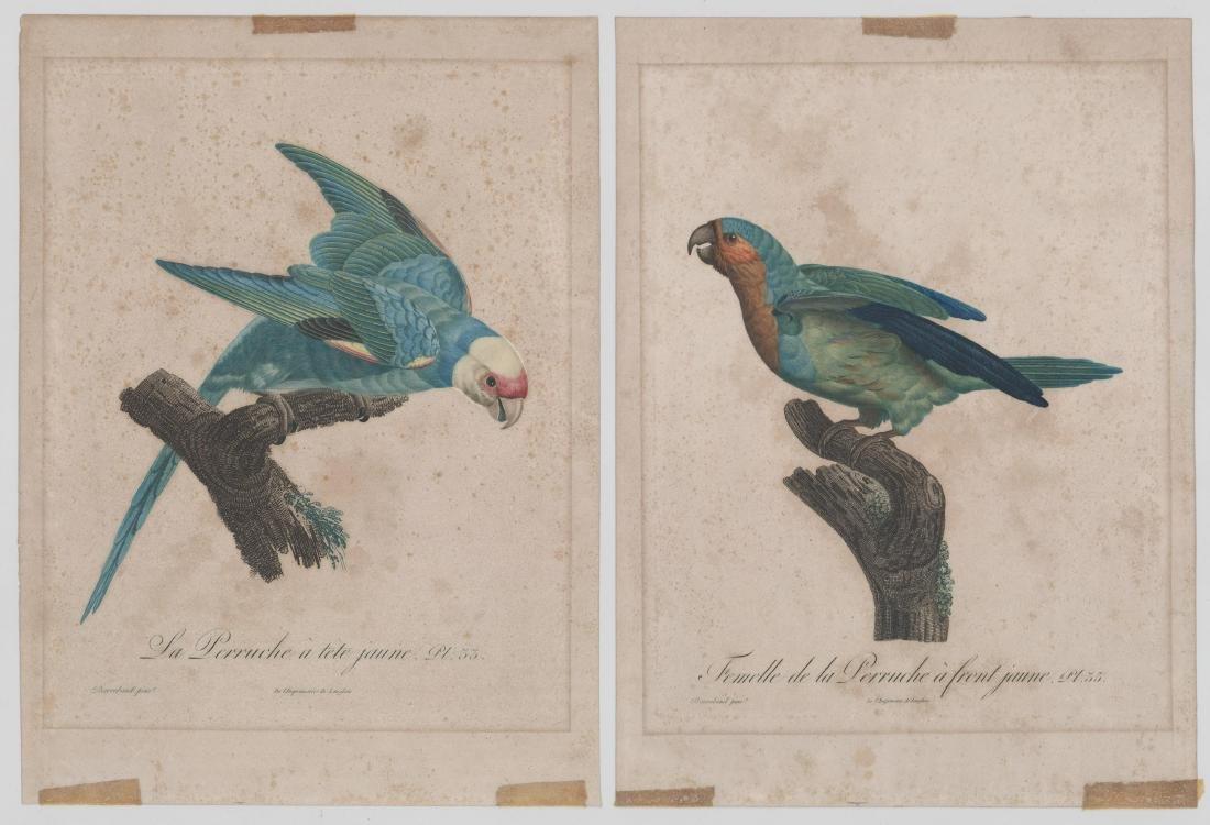 Jacques Barraband (1767 - 1809) Bird Prints