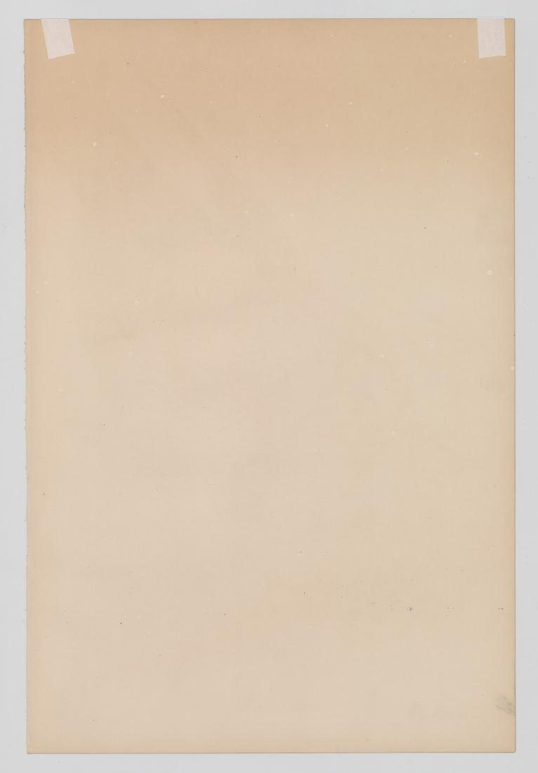 An Antique Bird Print by Gould & Richter - 4