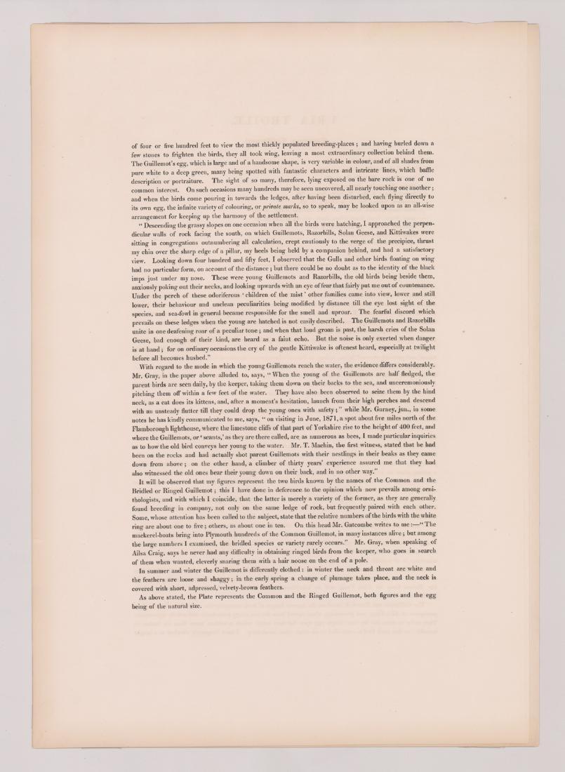Uria Troile, J. Gould & H. C. Richter 1847 - 3