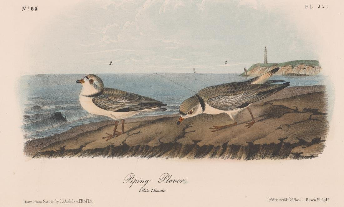 John James Audubon Bird Print