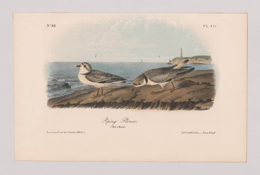 John James Audubon Bird Print - 2