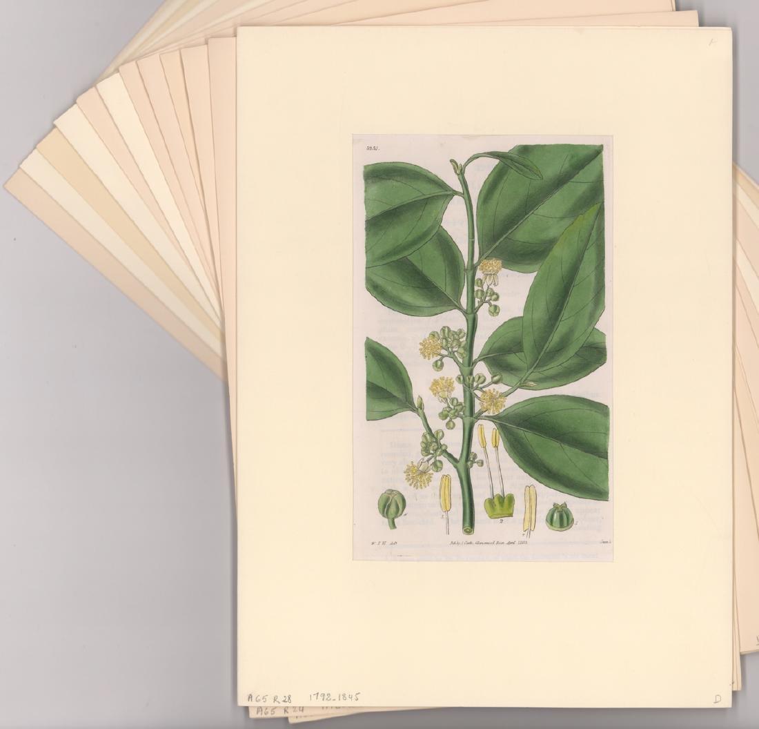 1792-1845 Curtis Botanicals (13)