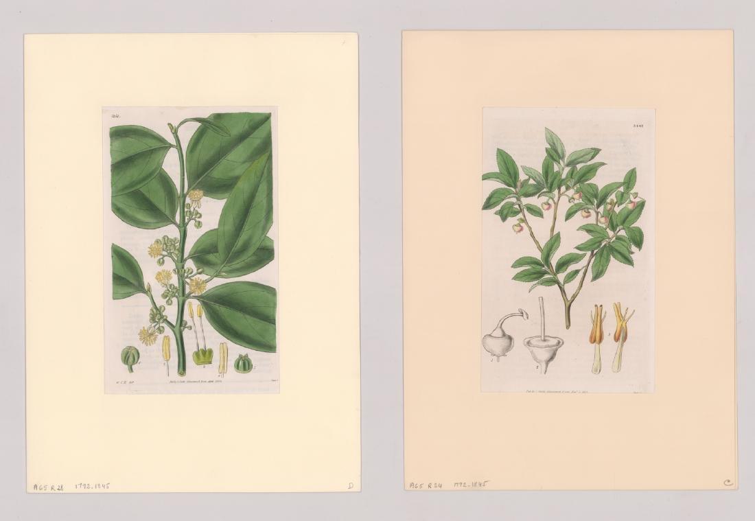 1792-1845 Curtis Botanicals (13) - 2