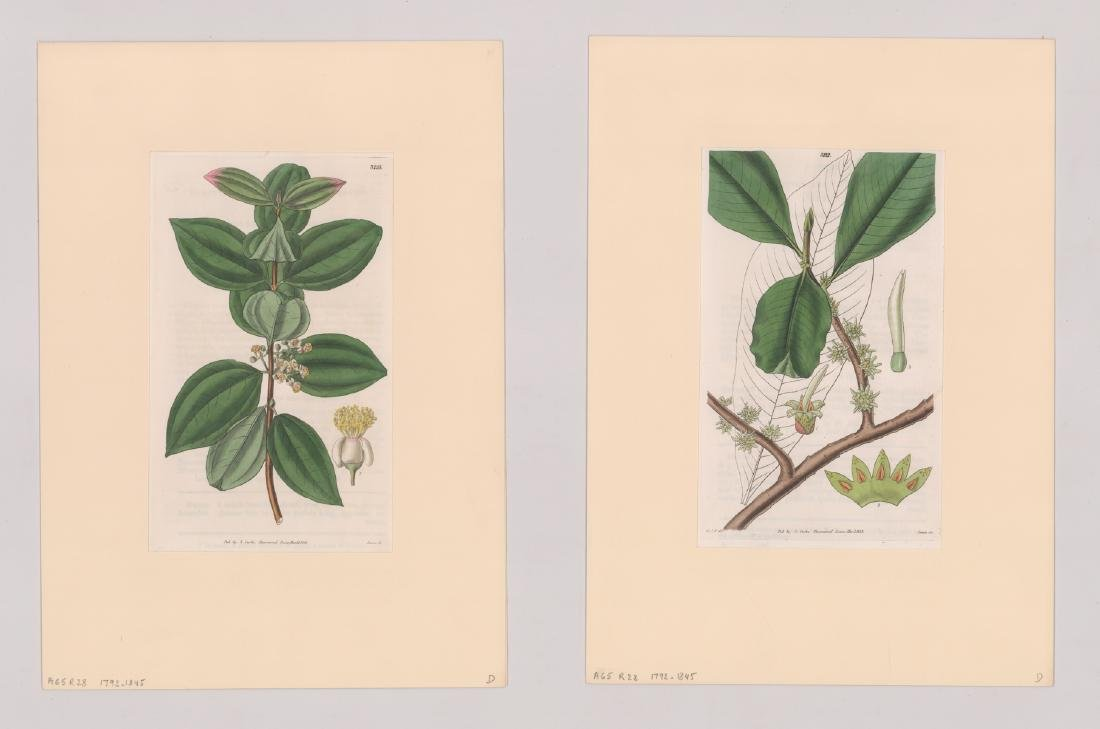 1792-1845 Curtis Botanicals (13) - 3