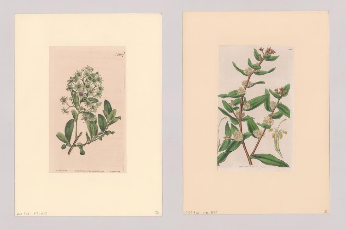 1792-1845 Curtis Botanicals (13) - 5