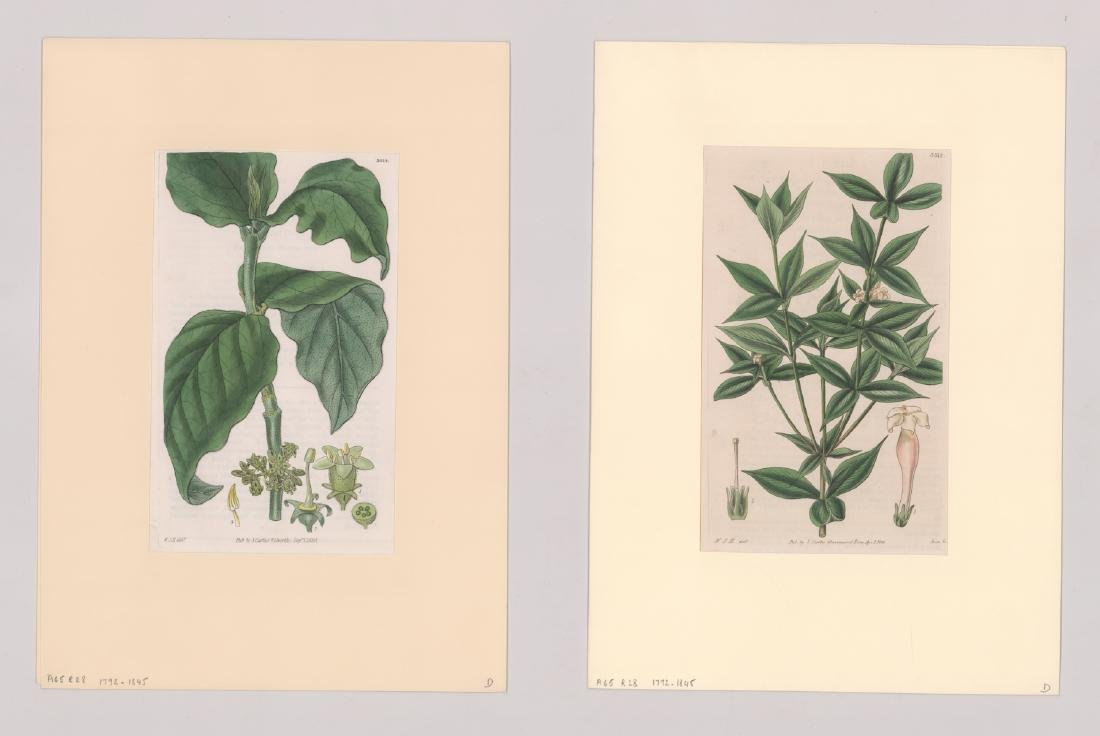 1792-1845 Curtis Botanicals (13) - 6
