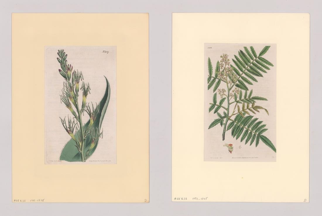 1792-1845 Curtis Botanicals (13) - 7