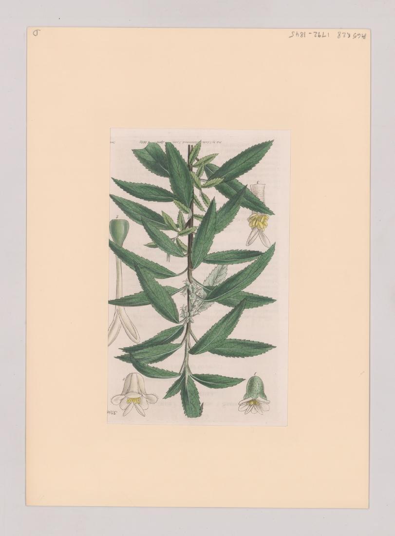 1792-1845 Curtis Botanicals (13) - 8