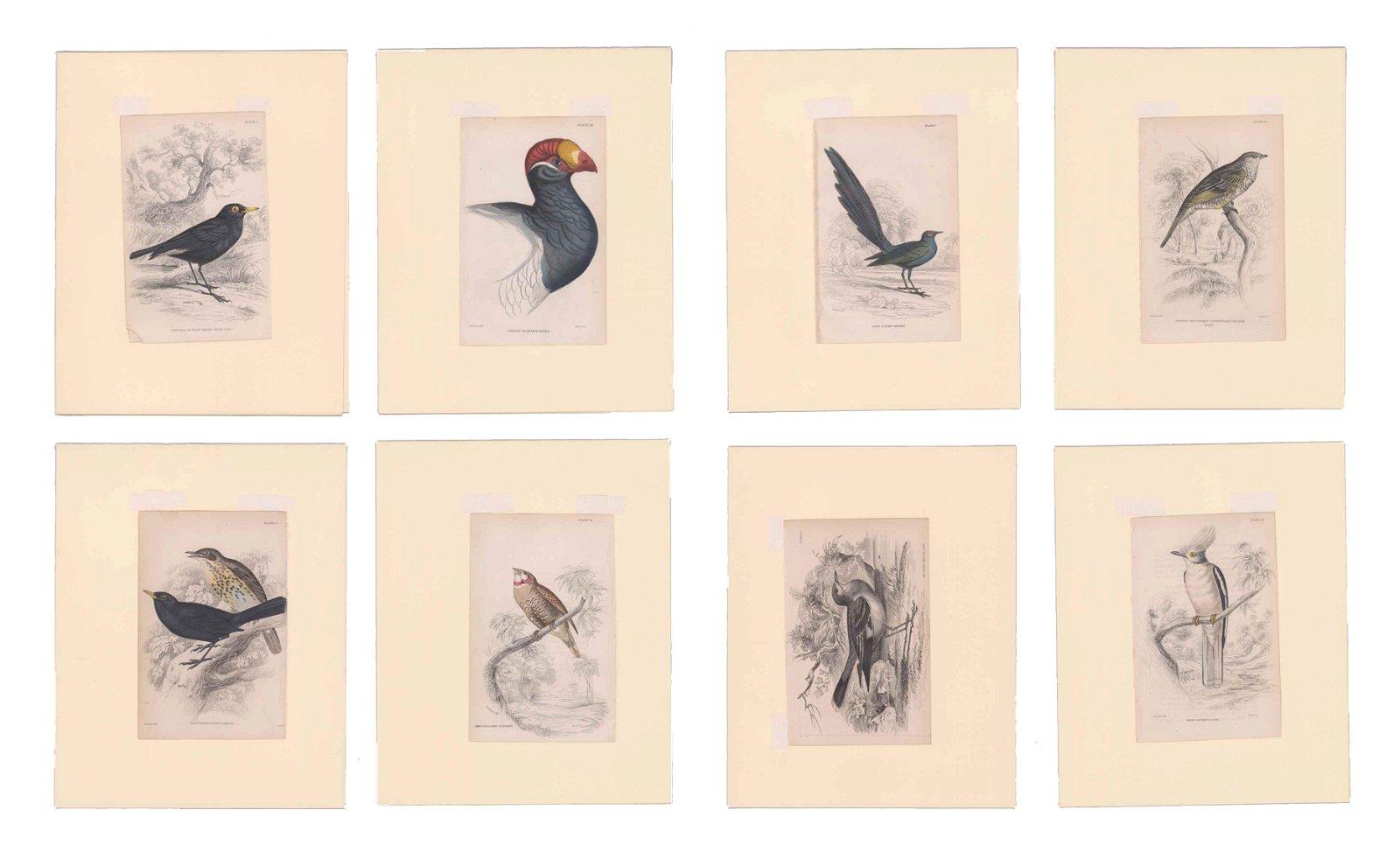 Lizars, Swainson, Jardine Prints [Birds]