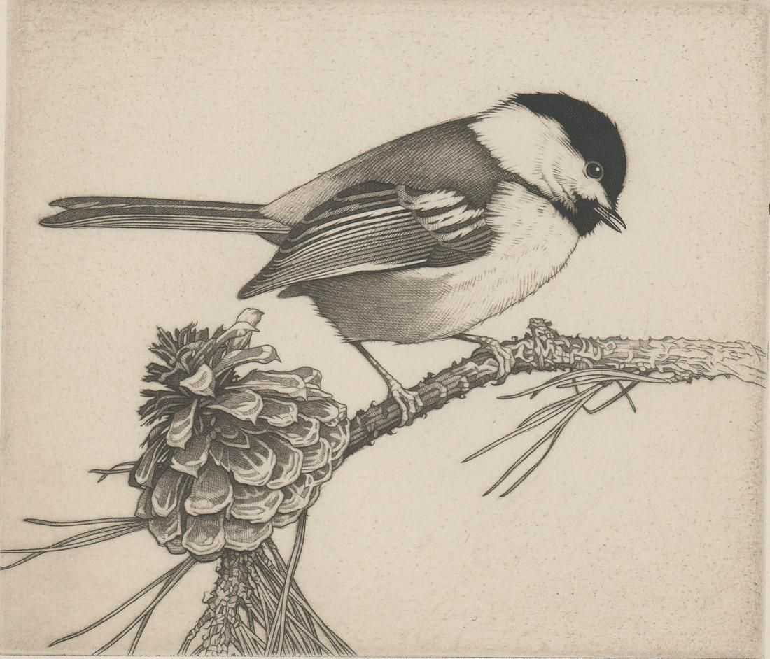 Charles E. Heil Etching [Chickadee with Pinecone]