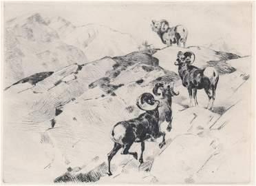 Carl Rungius Etching [AP, Bighorn Sheep]