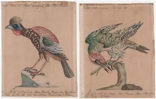 Saverio Manetti 19th C. (2) Engravings [Birds]
