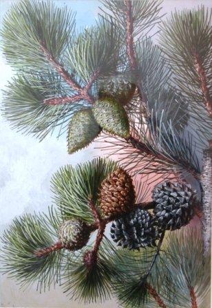 """1023A: ELLIS, Rowan (1848-1922) """"Pine Cones"""""""
