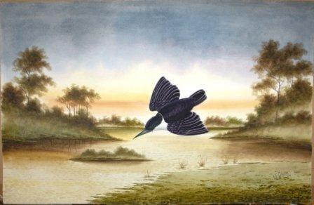 1001: CALVERT, H H  Forest Kingfisher, 1919.  W/Clr  62