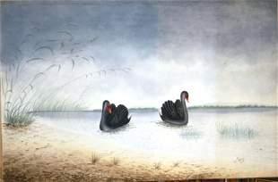 CALVERT, H H Black Swans, 1919. W/Clr 62x95 cm