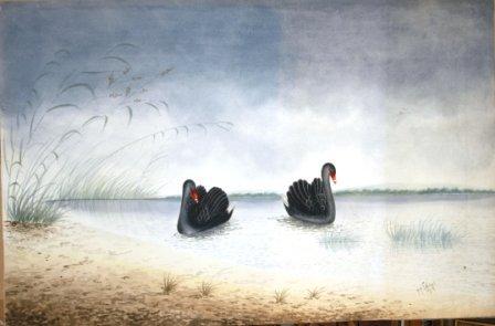 1002: CALVERT, H H  Black Swans, 1919.  W/Clr  62x95 cm