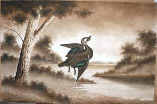 CALVERT, H H Shot Pacific Black Duck, 1919. W/C