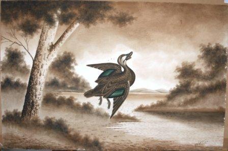 1006: CALVERT, H H  Shot Pacific Black Duck, 1919.  W/C
