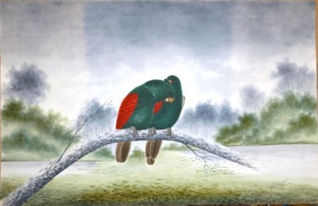 1007: CALVERT, H H  Pair of Parrots, 1919. Emerald & re