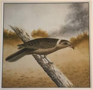CALVERT, H H Bird Study, 1915. Butcherbird. W/C