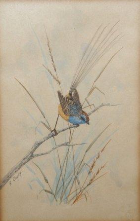 1285A: CAYLEY, Alice Blue Wren W/Clr 19.5 x 12.5 cm