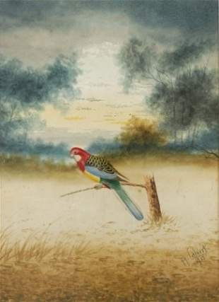 CALVERT, H H Parrot, 1915. W/Clr