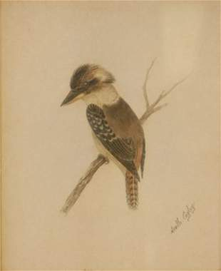 CAYLEY, (Snr) Neville Henry (1853-1903) Kookabur