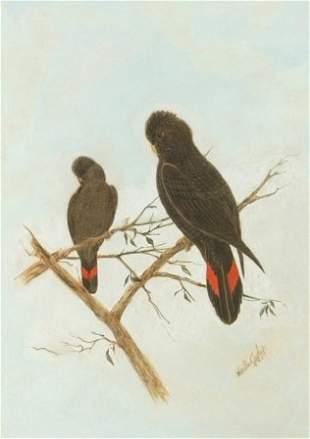 CAYLEY, (Snr) Neville Henry (1853-1903) 2 Black