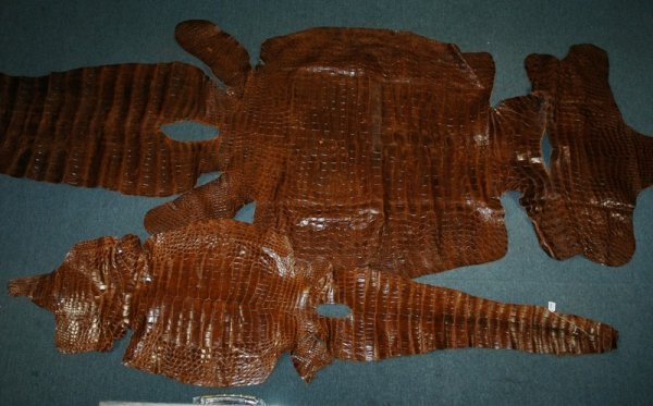 20: 4 Various New Guinea Crocodile Hides.  Collected in
