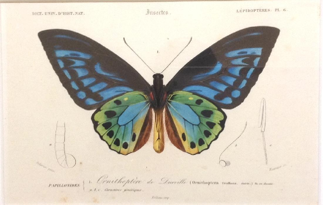 Butterfly - 4