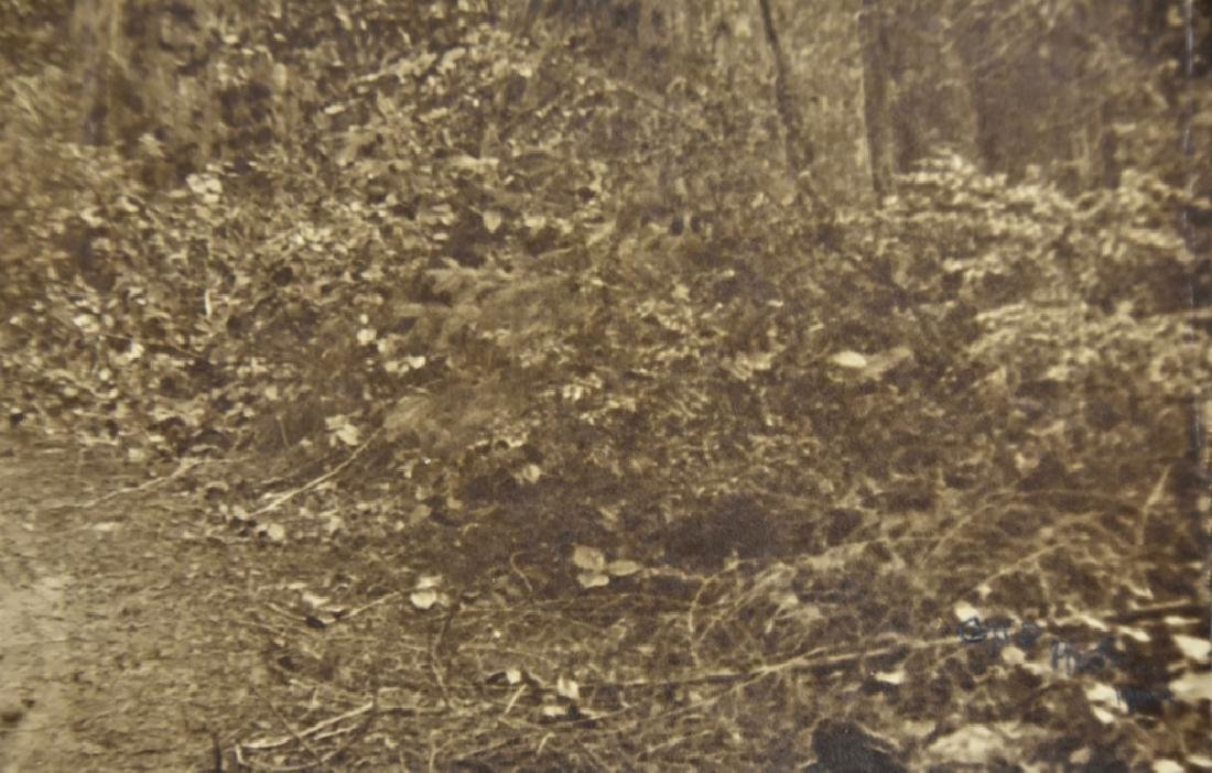 Redwood Forest - 3