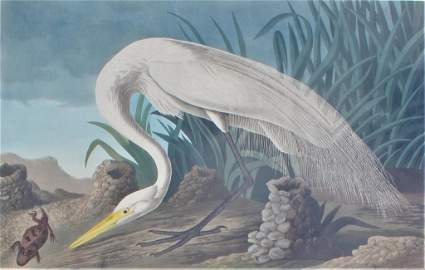 John James Laforest Audubon (1785 - 1851)