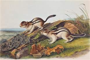 John James Laforest Audubon