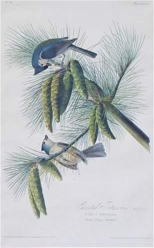 John James Laforest Audubon (1785 - 1851)