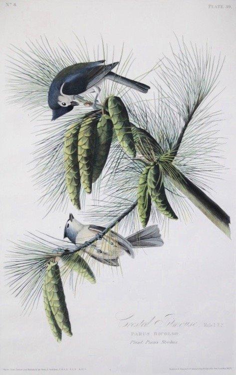 John James Audubon (1785 - 1851)
