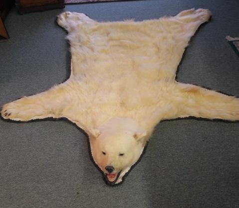 POLAR BEAR Skin Rug - Taxidermy - 2