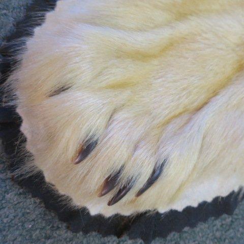 POLAR BEAR Skin Rug - Taxidermy - 3