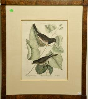 "Pair of Mark Catesby hand colored engravings ""The"