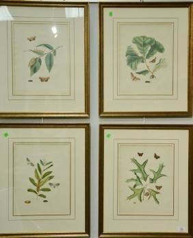 John Abbot (1751-1839) four hand colored aquatint