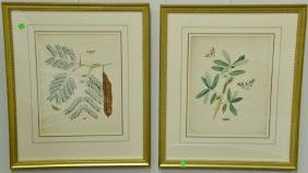 John Abbot (1751-1839) three hand colored aquatint