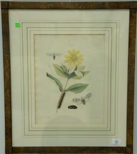John Abbot (1751-1839) pair of hand colored aquatint