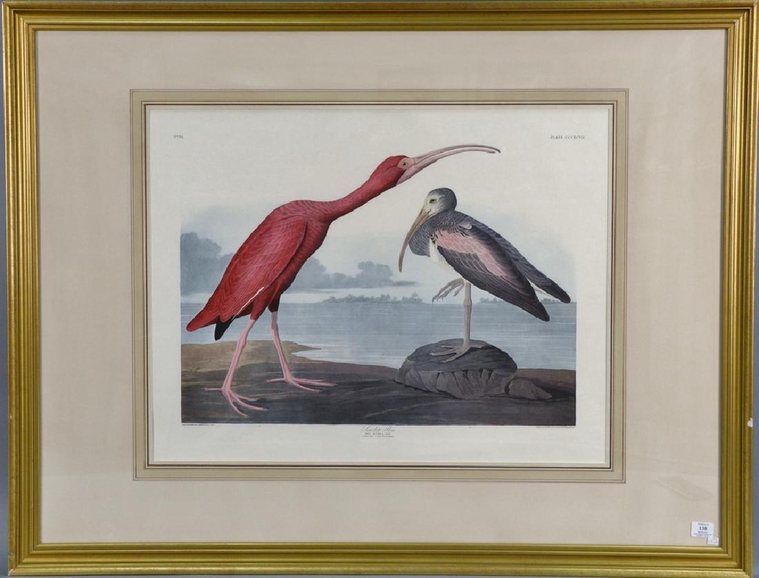 After John James Audubon, after Havell, colored print,