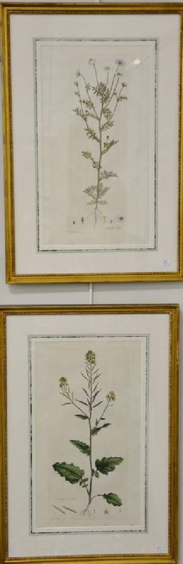 Five James Sowerby Botanical hand colored engravings