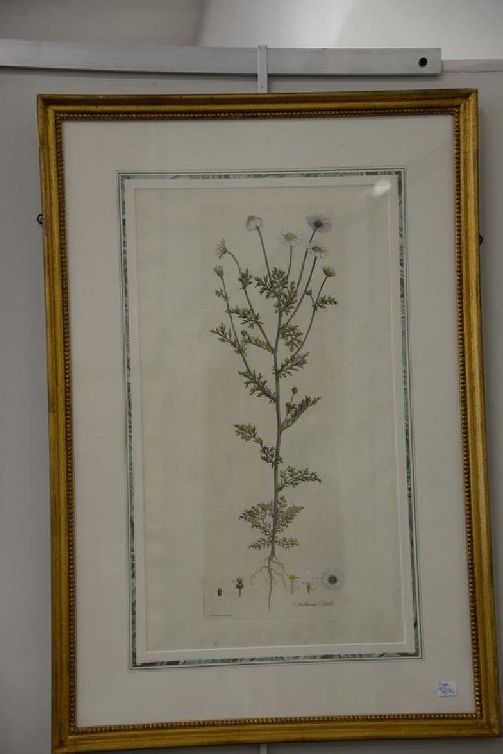 Five James Sowerby Botanical hand colored engravings - 2