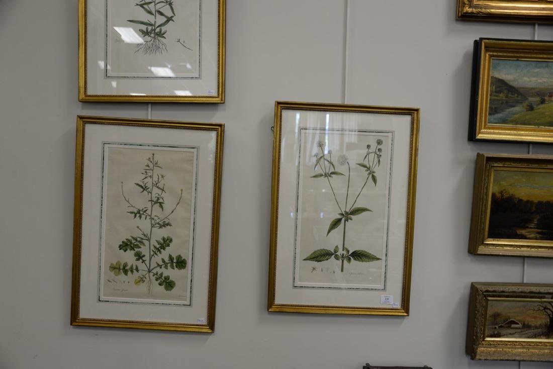 Five James Sowerby Botanical hand colored engravings - 4