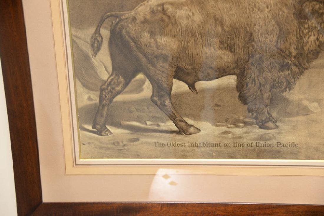 "Union Pacific lithograph of a buffalo ""The Oldest - 2"