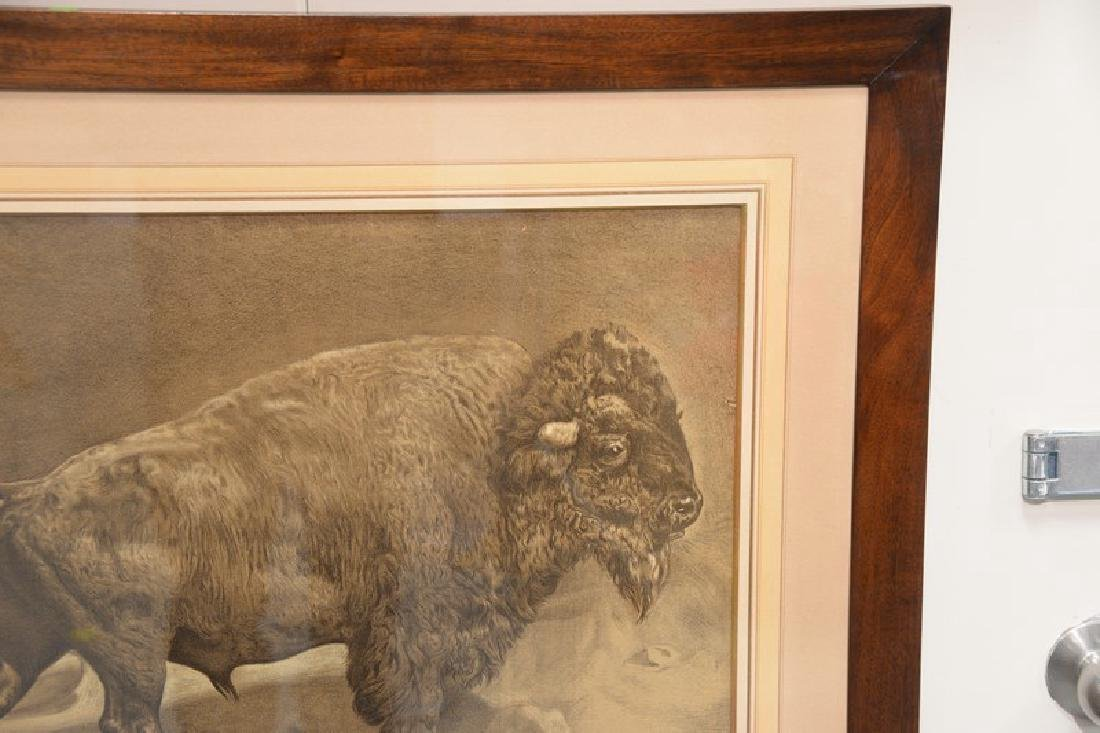 "Union Pacific lithograph of a buffalo ""The Oldest - 3"