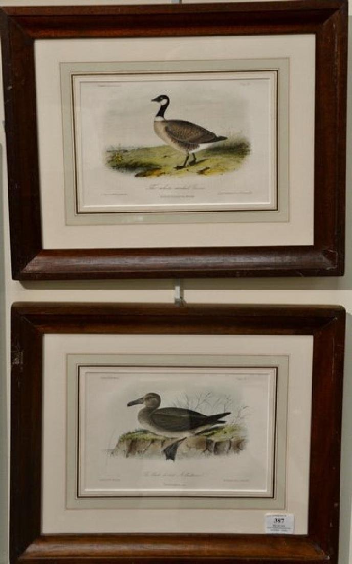 Four Cassin's Illustrations on stone by Wm. E.