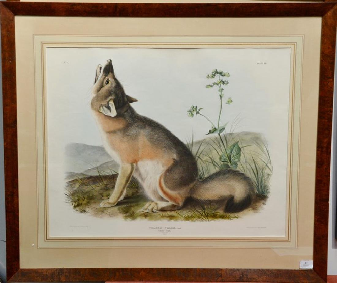 John James Audubon  hand colored lithograph Vulpes